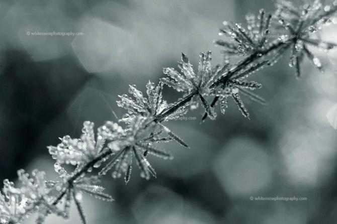 www.whitenoisephotography.com; frosty morning in Sardinia
