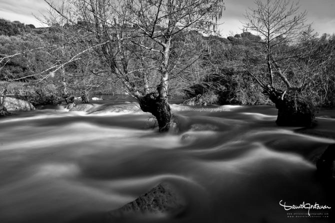 fiume albero