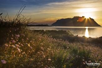 springtime sardinia, www.danielefontana.com